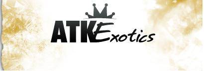 ATK Exotics Discount